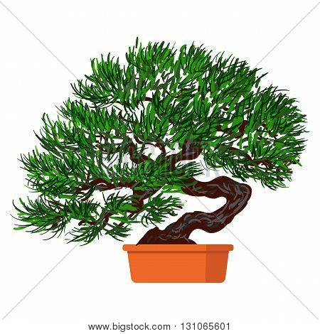 Vector illustration plant in pot. Bonsai dwarf tree.
