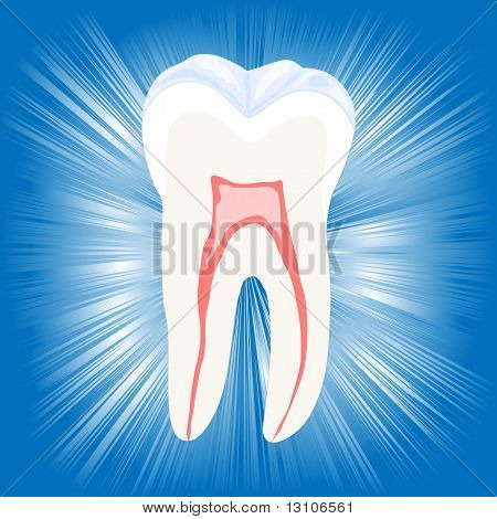 Tooth, vector illustration