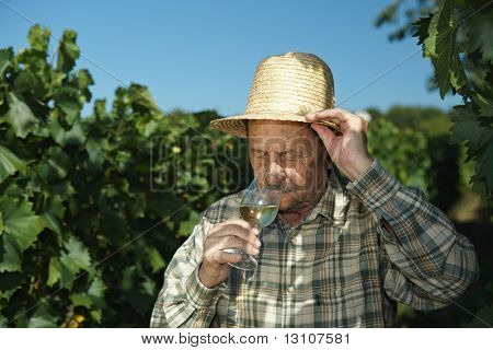 Senior winemaker testing wine outdoors in vinery.