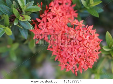 Red Flower Spike