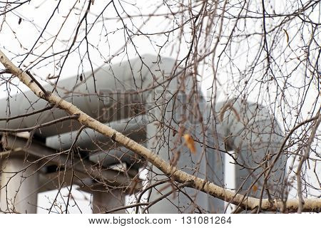 The branches of tree (birch) on a white background and large pipes