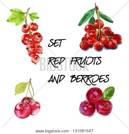 Set with red mountain ash cherry red currant and cranberry. isolated. hand-painted watercolor
