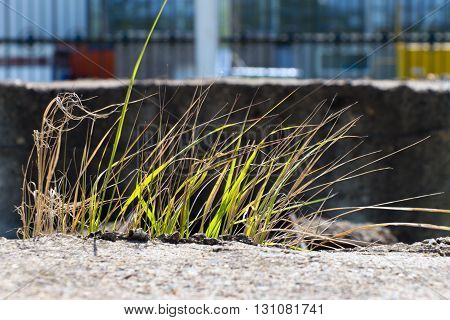 Light passes through the green blades of grass swaying in the wind. Grass grows on the stone (concrete block). In the background a fence.