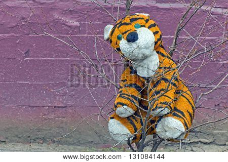Plush tiger toy forgotten on a tree in the rain