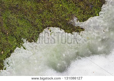 Snow melting in springtime and grass beneath it