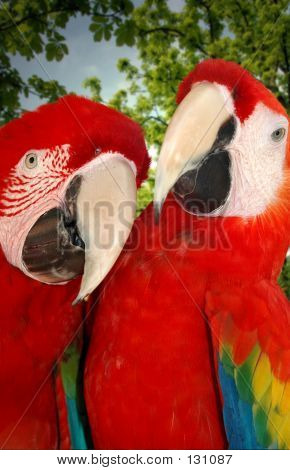 Parrots On Vacation