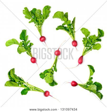 Collection red radish isolated on white background. Top view.