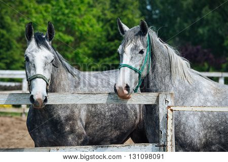 Beautiful Horses on the old farm picture
