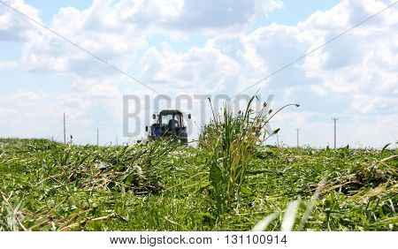 the last mowing spspring cleaning of young grasses for livestock feedring grass