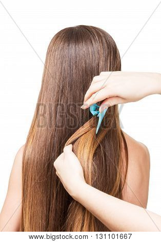 Hairdresser makes hairstyle on long hair isolated on white background.