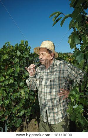 Senior Winzer in Weingut Wein im Freien zu testen.