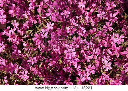 a very nice and  beautiful purple flowers