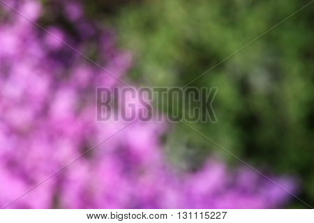 a background of very beautiful purple flowers