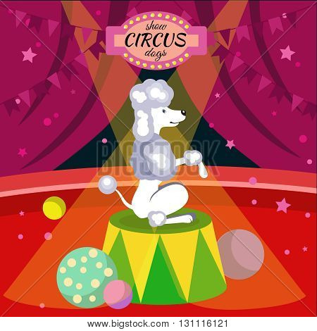 Dogs breed poster or flyer with poodle acting in the circus and an inscription show circus dogs vector illustration
