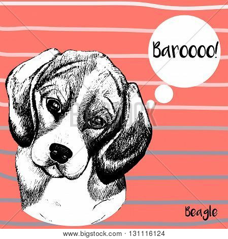 Vector close up portrait of beagle dog. Hand drawn domestic pet dog illustration. Isolated on pantone Peach Echo background with rose and grey strips.