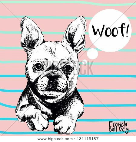 Vector close up portrait of french bulldog. Hand drawn domestic pet dog illustration. Isolated on rose background with cerulean stripes.