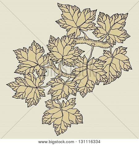 Hand drawn tree leaves, abstract vector illustration