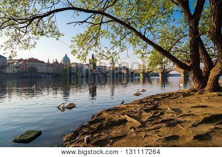 early spring morning on the Vltava River Prague Czech Republic