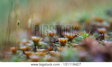 Young moss in the forest. Beautiful, clear moss, sharp needles