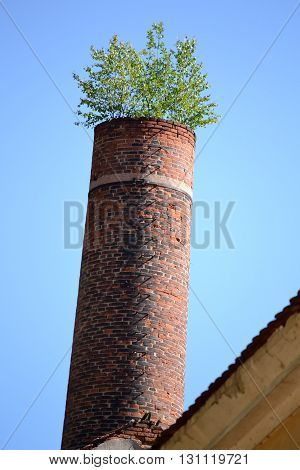 as an old brick factory chimney grow small trees