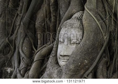 Buddha head in root tree at Wat Mahathat. Ayutthaya historical city Thailand Public temple