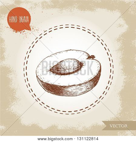 Hand drawn ripe aprocot isolated on vintage background. Retro sketch style vector eco food illustration