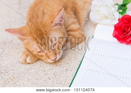 Orange cat sleeping Peaceful near a flower and notebook select focus cat sleeping