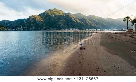 A Dog is running on the beach in Marmaris