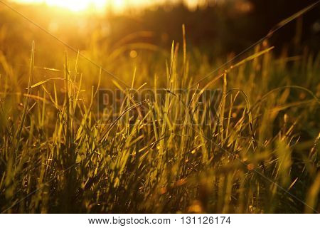 a yellow green grass nice a  background