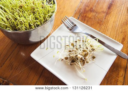 Lentil sprouts growing in a bowl beside a plate piled with sprouts