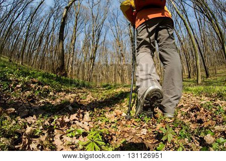 Low Angle. Hiker - man hiking in forest. Male hiker walking in forest. Caucasian male model outdoors in nature.