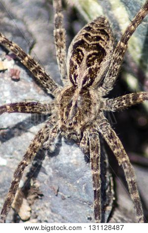 A macro show of a spider on a rock