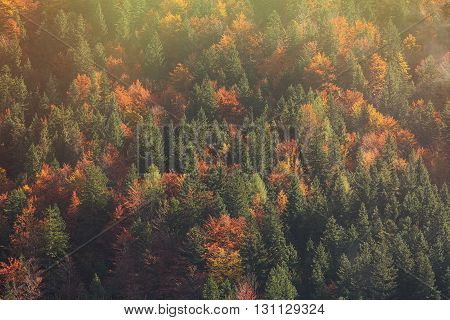 Aerial shot of coniferous and deciduous mountain forest in autumn colors of shiny glowing sunlit morning. Seasons changing unique sunlight concept textured background.