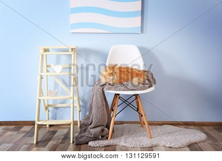 Cute ginger cat on chair