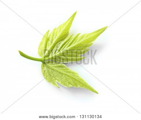 Green leaf isolated on white