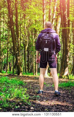 Rear view hiker with backpack young man walking in beautiful forest summertime journey