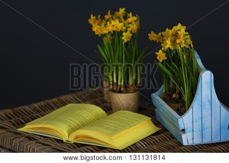 Beautiful narcissus in crate and open book on dark background