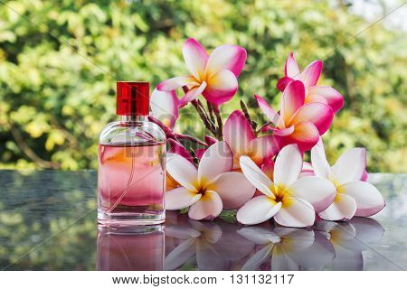 Beautiful Bunch Of White Pink And Yellow Flower Plumeria Or Frangipani With Perfume Bottle On Nature