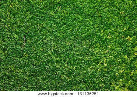 Green grass seamless texture. nature concept background