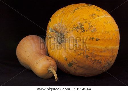 oblong and round pumpkins