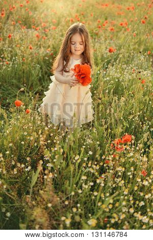 on the little cute girl in a white dress with long hair collecting poppies