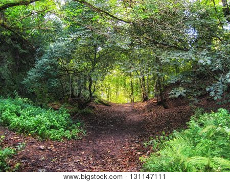 Scottish woodland path leading into the sunshine