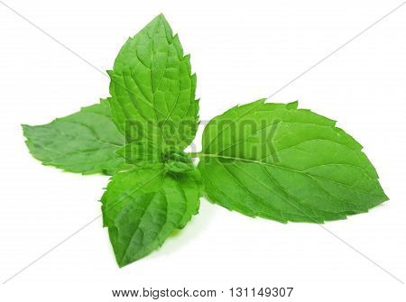 Peppermint leaves or mint leaf, isolated on white