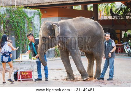 CHIANGMAI, THAILAND - April 10, 2016 : Many people feeding food to baby elephant at Chiangmai night safari