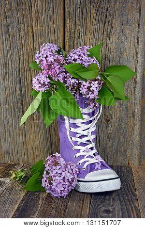 Purple lilac bouquet in purple high top sneaker on rustic barn wood.
