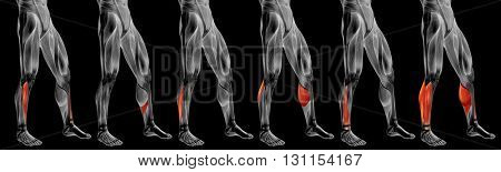 Concept or conceptual 3D human lower leg anatomy or anatomical and muscle set or collection isolated on black background