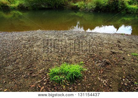 a picture of an exterior Pacific Northwest pond with native grass on the shoreline