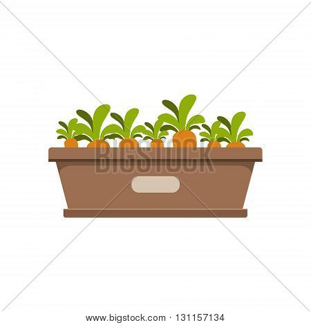Carrots Growing In Crate Bright Color Simple Style Flat Vector Illustrations On White Background
