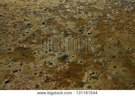 a picture of an exterior Pacific Northwest tidal shoreline  mud flat