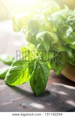 Fresh organic basil